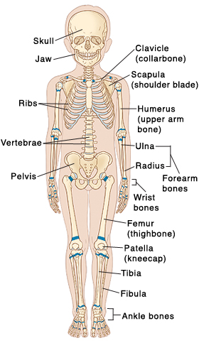 Pediatric Skeletal Anatomy