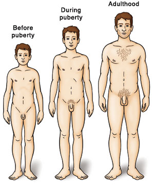 Three boys showing development: before puberty, during puberty, and adulthood.
