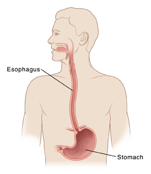 esophageal ulcer diagram of the human esophagus #12