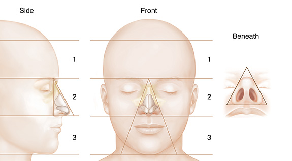 Understanding Nasal Anatomy: Outside View