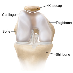 Front view of bent knee showing normal cartilage.