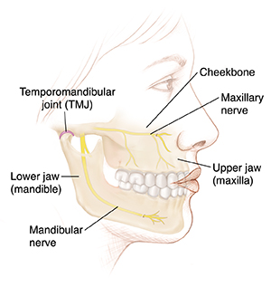 Understanding Jaw (Orthognathic) Anatomy And Problems