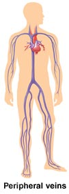 Outline of human figure showing peripheral veins in legs and arms.